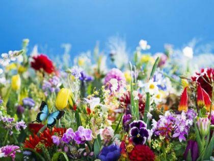 【札幌芸術の森美術館】蜷川実花展―虚構と現実の間に― イメージ画像