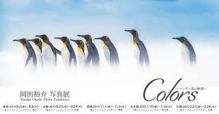 岡田裕介 写真展 「Colors ~ペンギン島の物語~」 イメージ画像