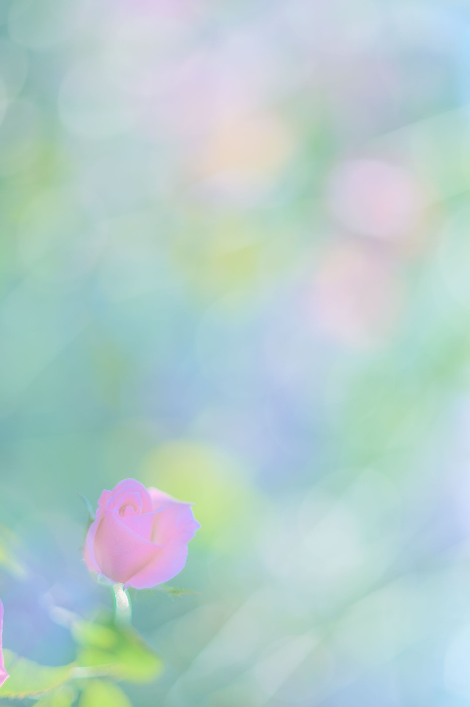 若林浩樹写真教室作品展 イメージ画像